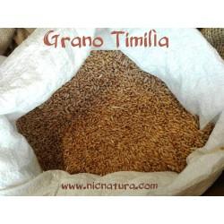 Grano Timilia Bio