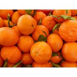 Marmellata di mandarini BIO