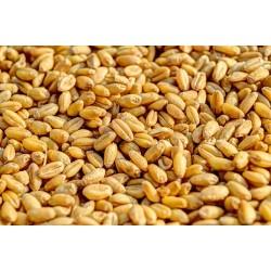 Farina Dieci Cereali