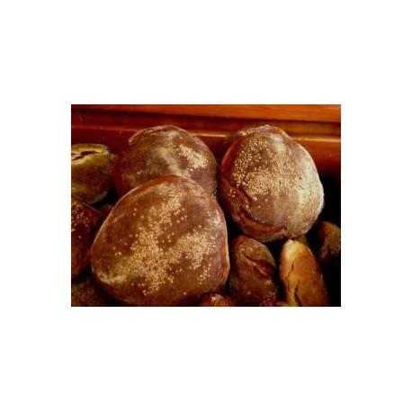 Pane nero di Castelvetrano (pagnotta)